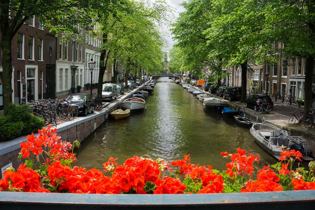 Beautiful red flowers in beautiful Amsterdam - The Two Drifters www.thetwodrifters.net