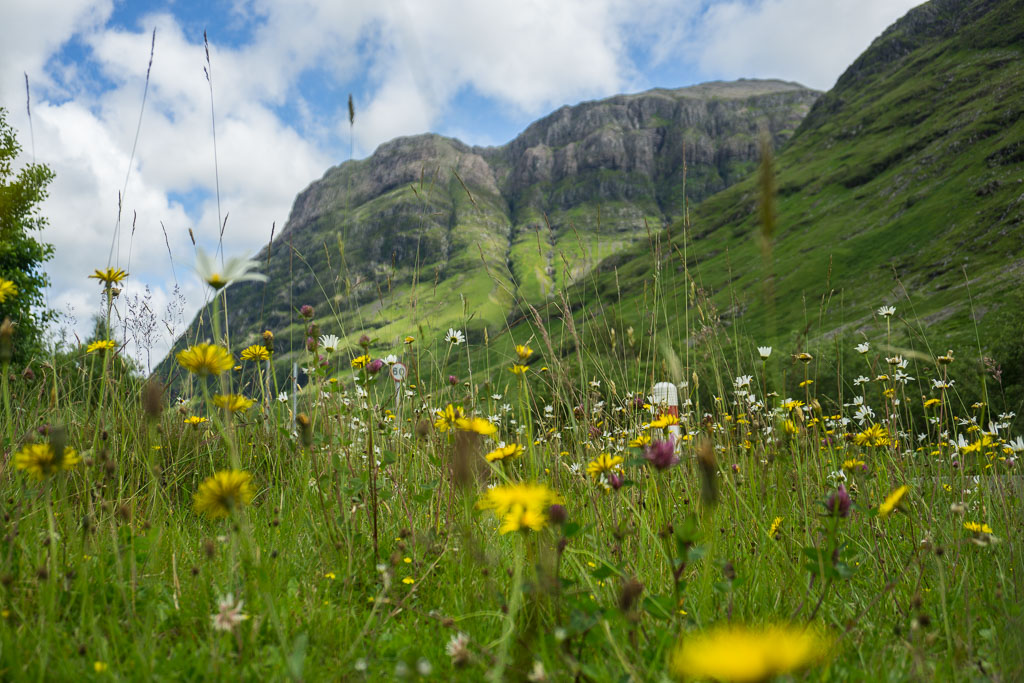 Glencoe The Two Drifters Wild Flowers Mountain