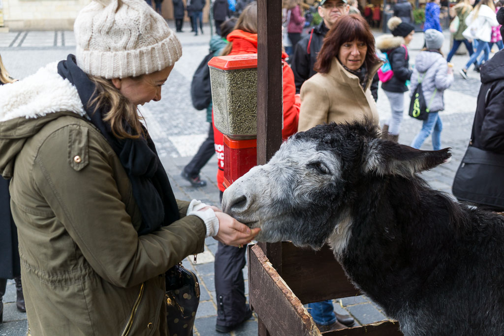 Eilis feeding the donkey, Prague at  Christmas, The Two Drifters, www.thetwodrifters.net